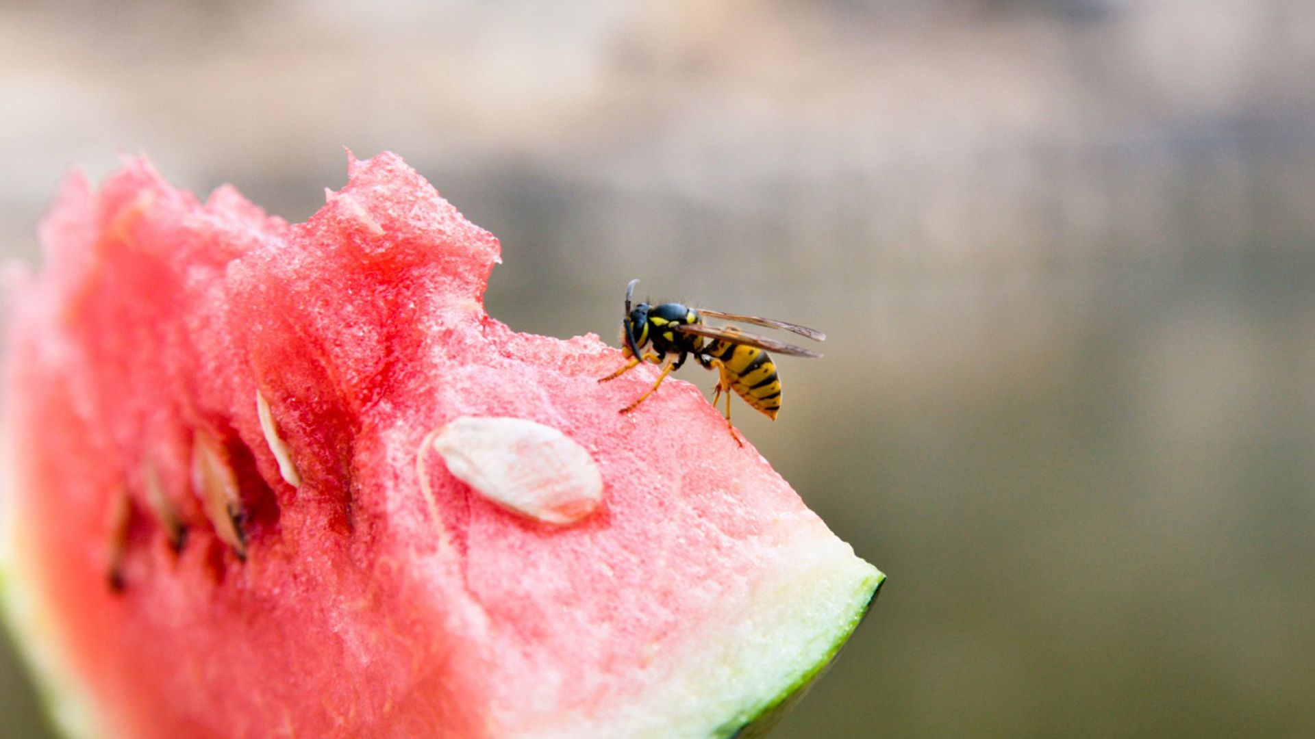 Wassermelone mit Wespen von Lidl Österreich