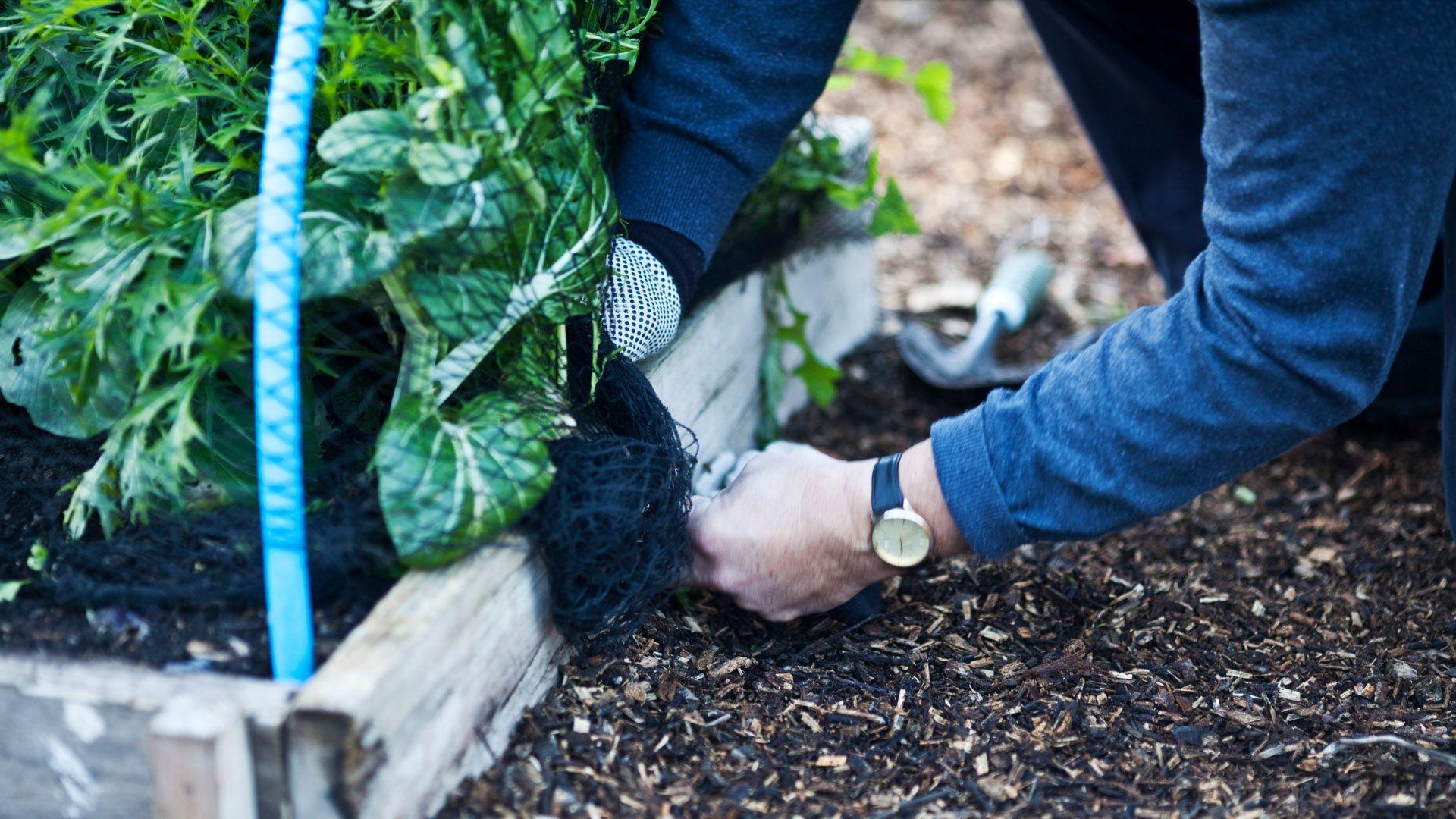 3 Tipps, wie ihr eure Pflanzen winterfest machen könnt von Lidl Österreich