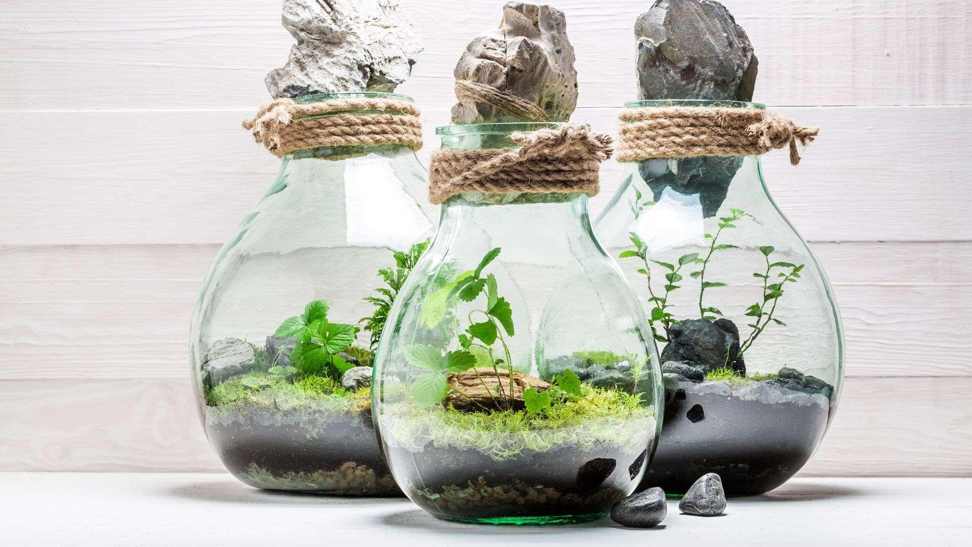 DIY Garten im Glas von Lidl Österreich