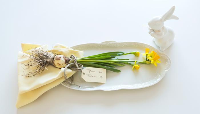 Frühling Tischdeko Dekoration Narzisse Ostern Blumen mit Wurzel zum Pflanzen